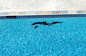 StLouis-inground-pool-17
