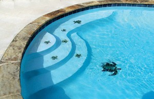 mobile-inground-pool-33