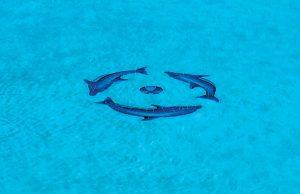 pool_mosaic_bhps_60